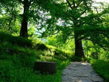 公园门票   钱冲古银杏生态旅游区位于安陆市王义贞镇,地处大洪山随州