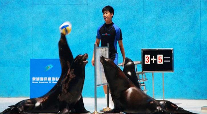 海狮排球赛