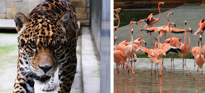 哈尔滨北方森林动物园门票预订