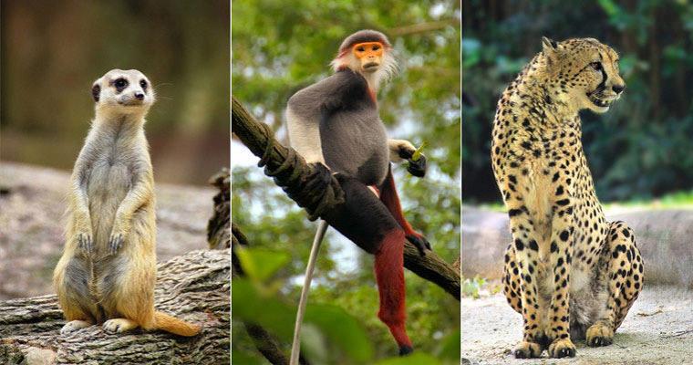 qq旅游网-新加坡日间动物园景点门票详情