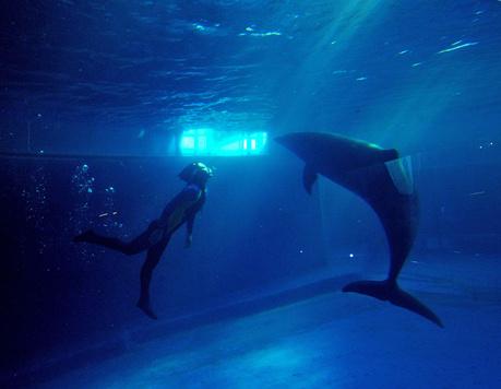 壁纸 动物 海底 海底世界 海洋动物 海洋馆 水族馆 桌面 459_356