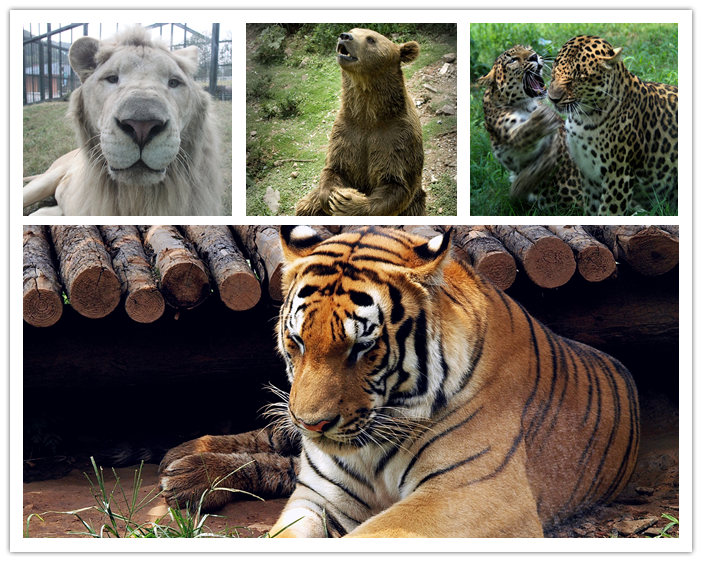 无锡动物园园区内生活着来自世界各地的珍惜野生动物