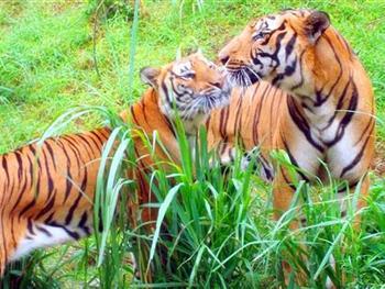 使华南虎等国家重点保护的珍稀濒危动植物种群数量得到恢复性增长.
