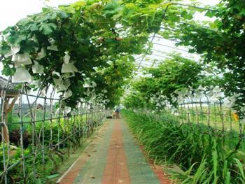 上海强丰生态休闲农庄
