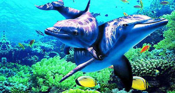 【纯玩】太平洋海底世界 紫竹院 赠皇家御河游船 动物园巴士一日游