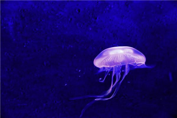 门票 蚌埠海贝海洋乐园门票价格 蚌埠海贝海洋乐园预订 蚌高清图片