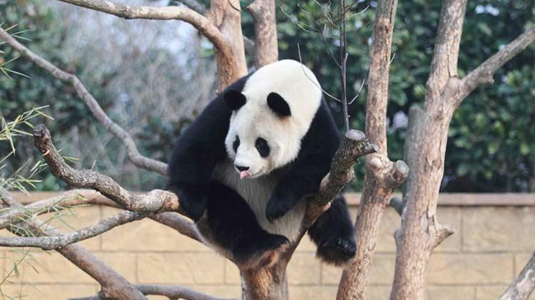 是杭州野生动物世界专门