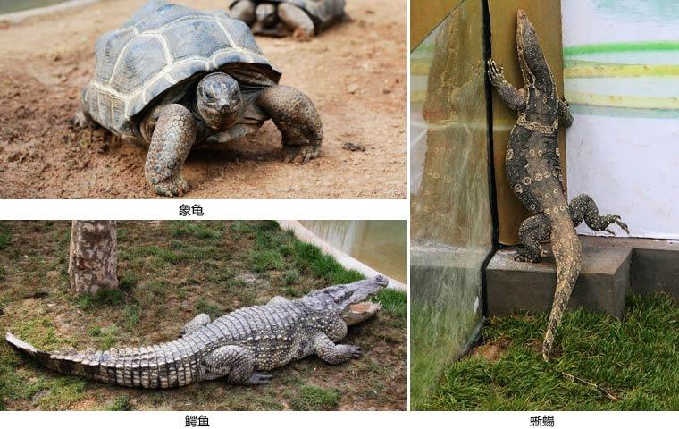龟等需要冬眠的动物