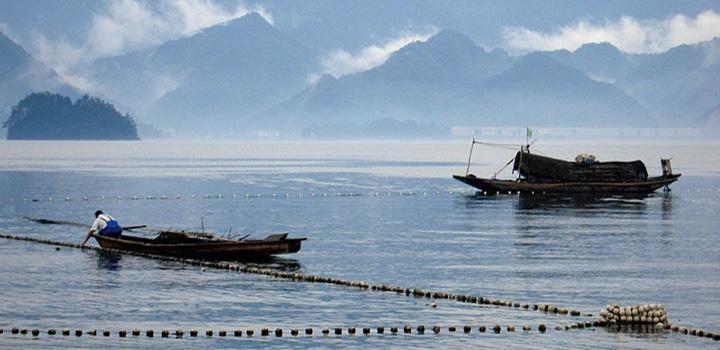 巨网捕鱼是千岛湖渔民的独门绝活,有一整套严谨的工作流程,一环扣一环