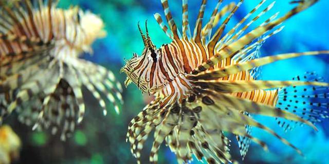 壁纸 动物 海底 海底世界 海洋馆 水族馆 鱼 鱼类 640_320