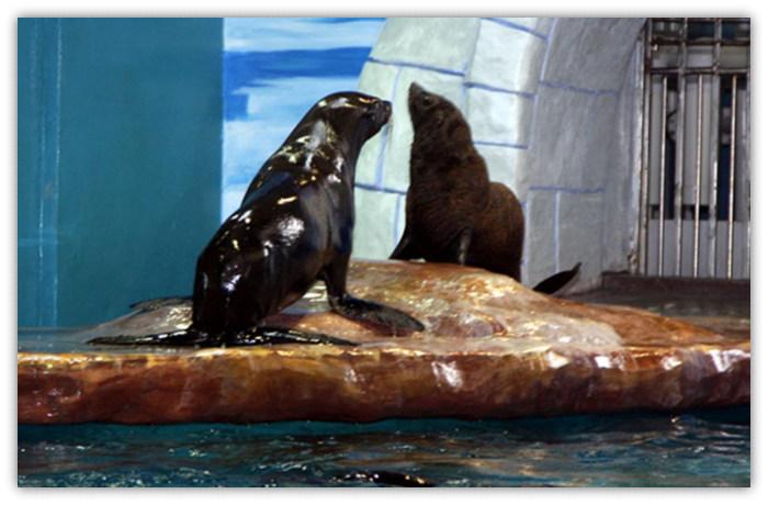 深圳小梅沙海洋世界(深圳海洋世界)  深圳小梅沙海洋世界小动物剧场
