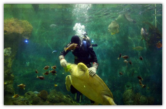 深圳小梅沙海洋世界