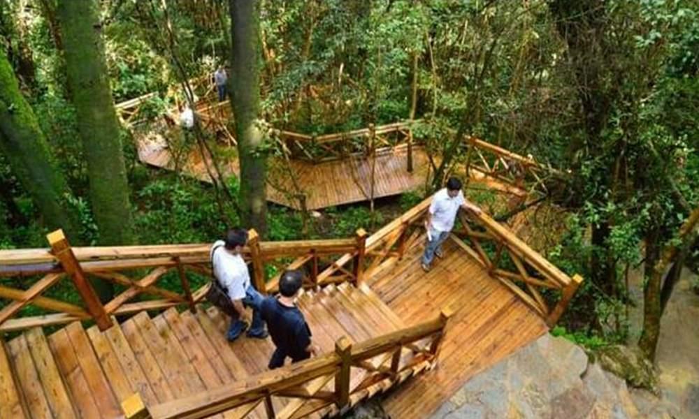 游玩景点可邑小镇 密枝山景区:位于寨门入口左侧原始森林之中,蜿蜒