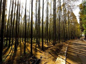 山王坪喀斯特国家生态公园门票
