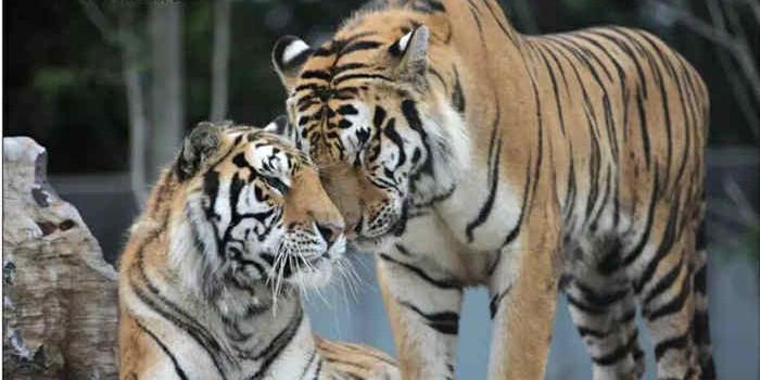 【上海野生动物园成人票