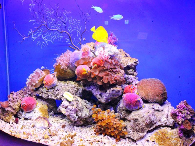 石家庄动物园海洋馆门票