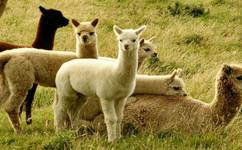 【国庆1号铁定发班】<上海野生动物园跟团1日游>跟小伙伴一起探索动物世界吧,苏州出发