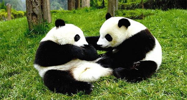 【休闲之旅】碧峰峡全景(动物园 风景区) 上里古镇二日游