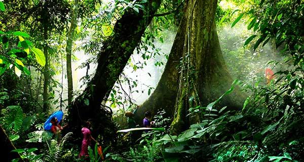 【傣乡红品质团】 西双版纳野象谷-勐仑热带植物园-基诺山寨-原始森林
