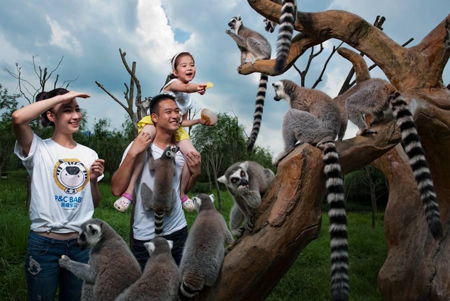 杭州野生动物世界】游玩杭州野生动物世界,入住西湖风景区内度假酒店
