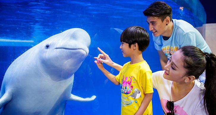 友好的白鲸同志跟我们可爱的小朋友打招呼啦,胖嘟嘟的小白鲸