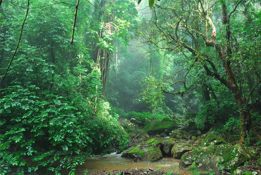 【西双版纳勐远仙境双人两日自助游】神秘的热带雨林集合溶洞景观图片
