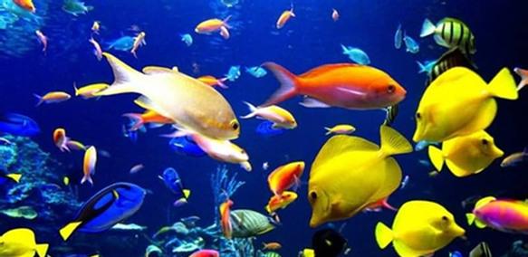 青岛极地海洋世界 一座现代化极地动物展馆,国际上拥有极地海洋动物品