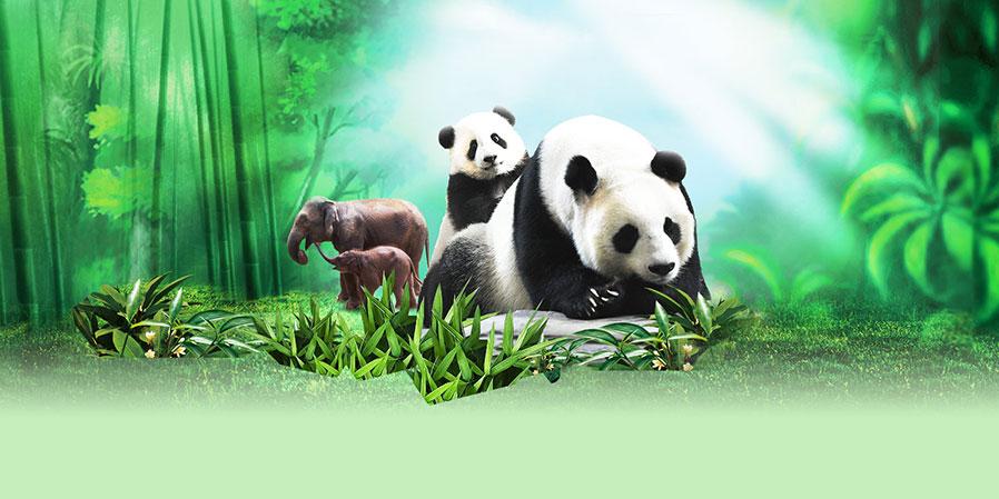 长隆野生动物园珍稀动物的天堂 长隆野生动物世界以大规模野生动物