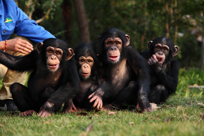 【亲子嘉年华】 玩上海野生动物园,近距离的亲近动物,感受人与动物的