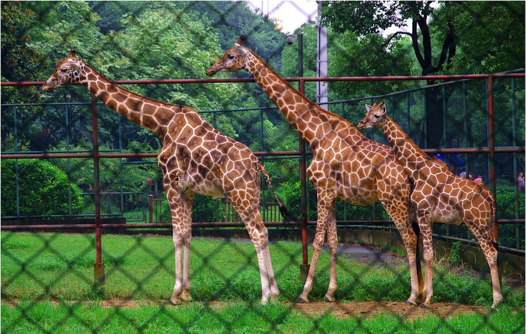 红山森林动物园内有儿童游乐场,5d动感影院,冒险森林等项目,拥有各类