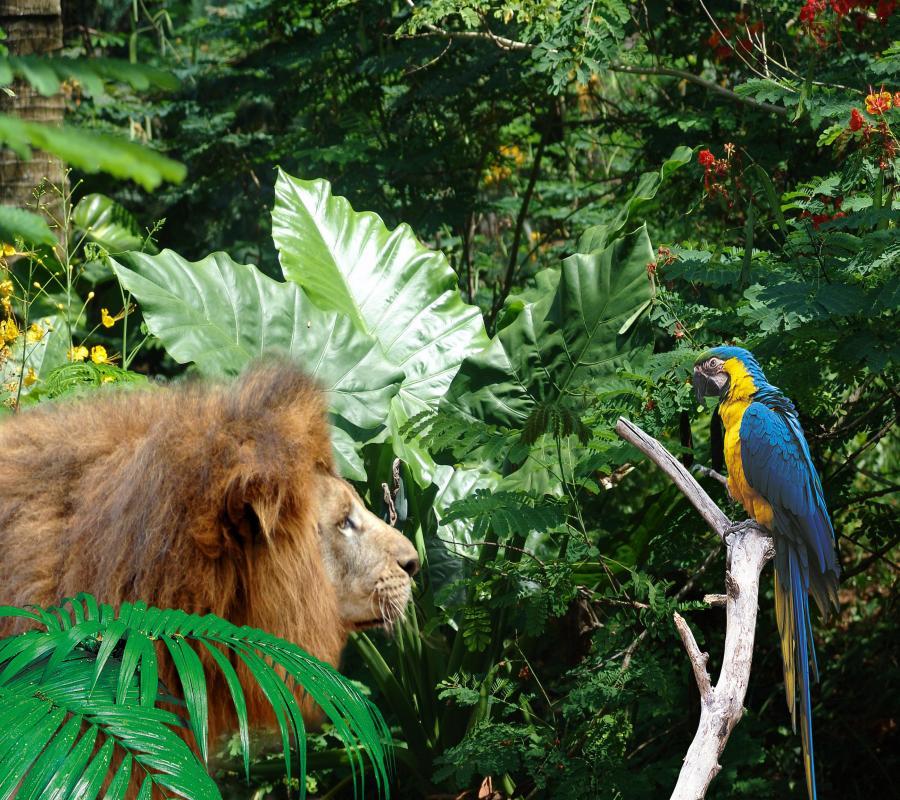 海南热带野生动植物园(特惠成人票)2张 海口宾馆(标准双床)1晚