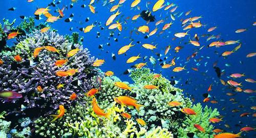 园】小孩来北京海洋馆看神奇的海底世界吧,还有可爱的动物邀您亲密接