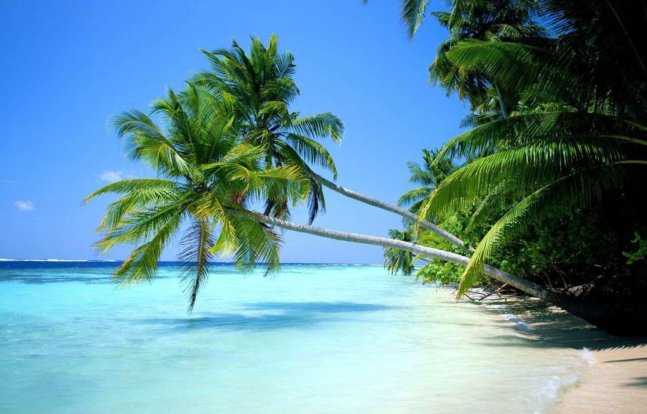 阳光下的波涛,椰树旁的吊床,白色沙滩上嬉戏的孩子,旖旎的热带风光让