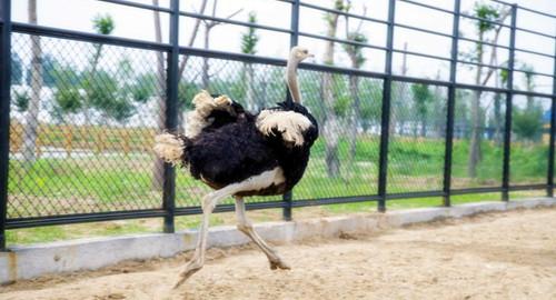江苏周边游 宿迁周边游 > 【周末游】周末你可以带着孩子去动物园
